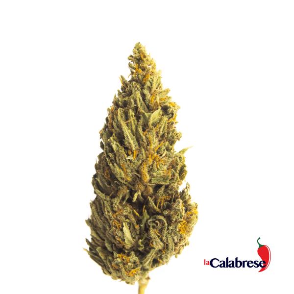 La Calabrese - infiorescenze - erba di Calabria erbadicalabria.com